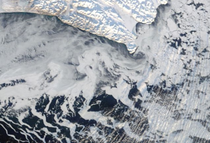 """wavy tendrils—newly formed, thin sea ice"""